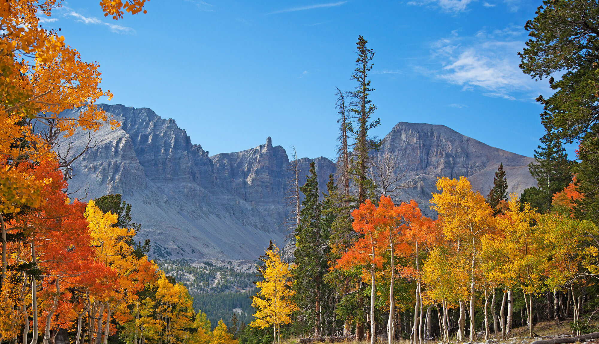 Great Basin National Park in Fall