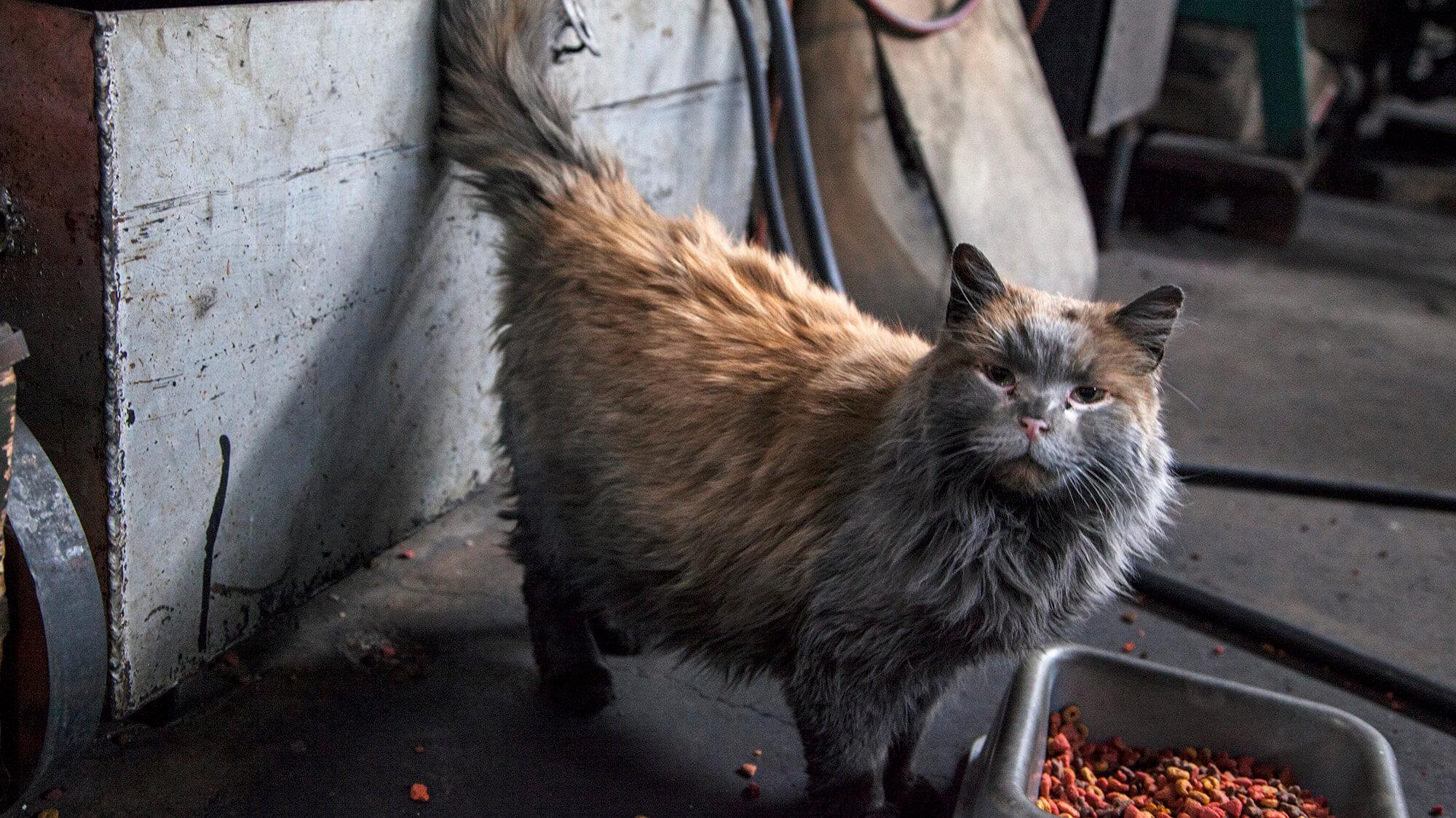 Dirt the Cat