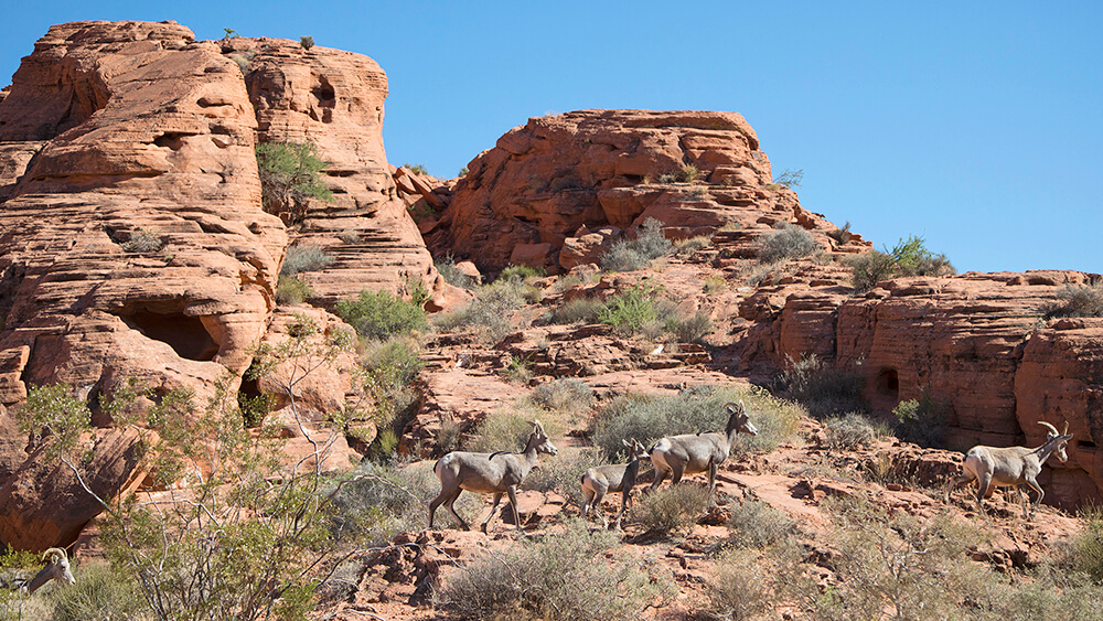 valley of fire animals