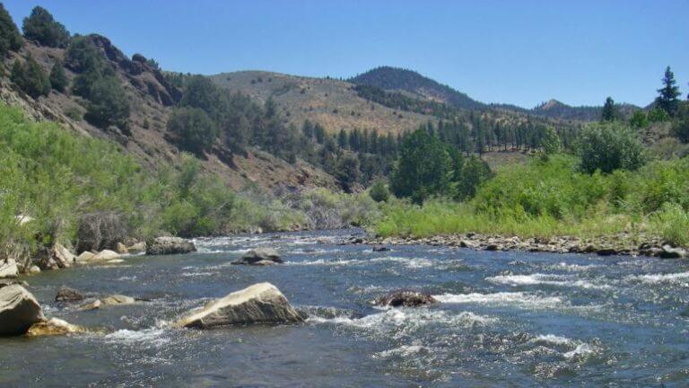 Carson River Fishing