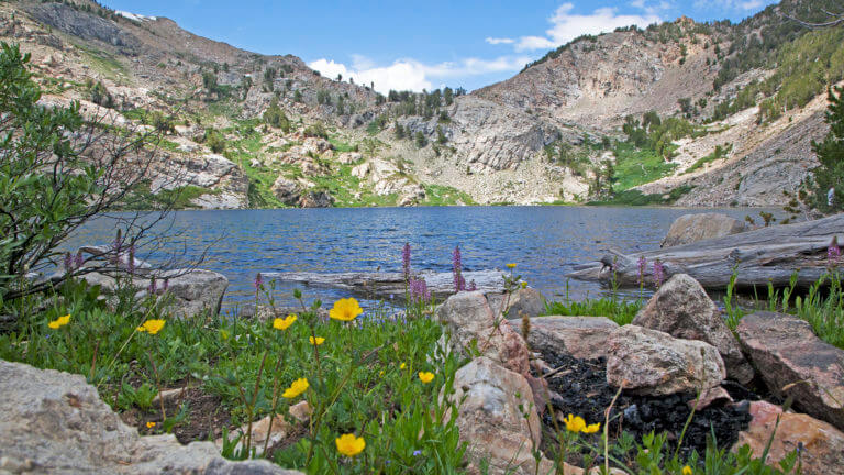 lake and flowers in ruby mountains nevada