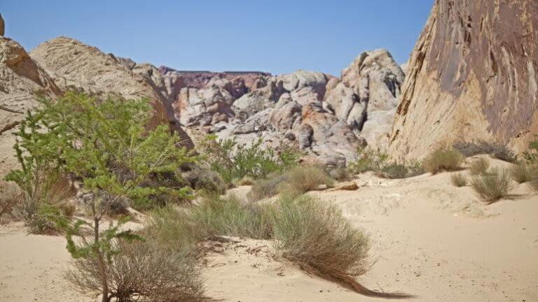 Valley of Fire sand dunes
