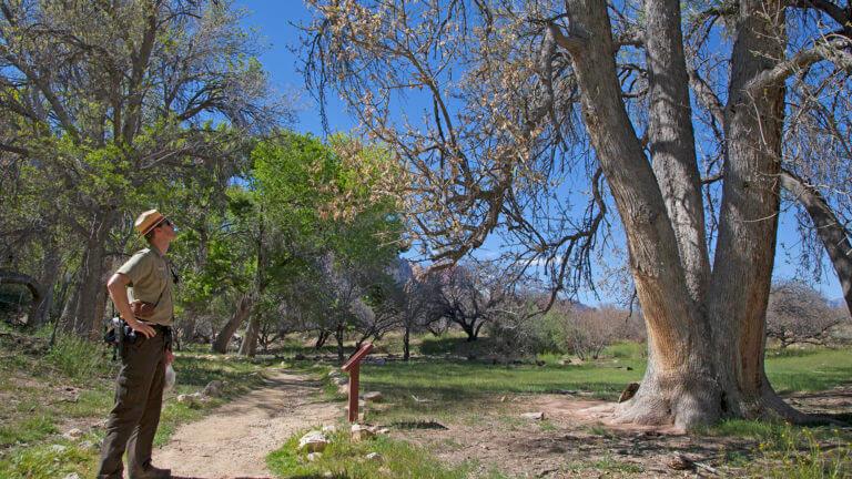 Spring Mountain Las Vegas area trails