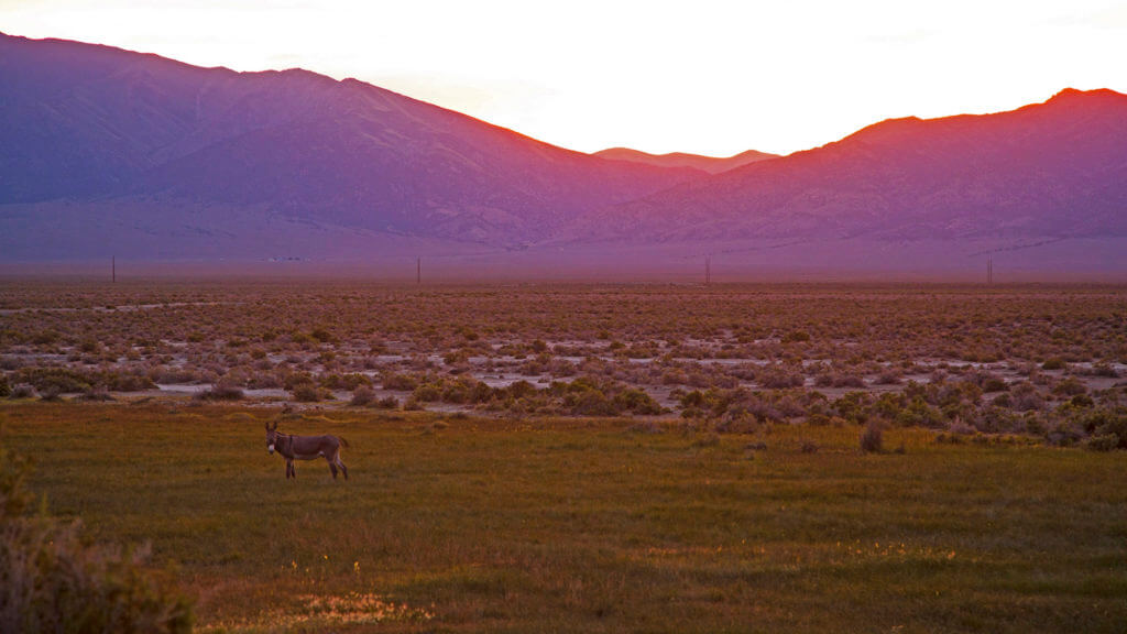 9 Reasons To Buck Up And Get To Know Nevada's Wild Burro Babes