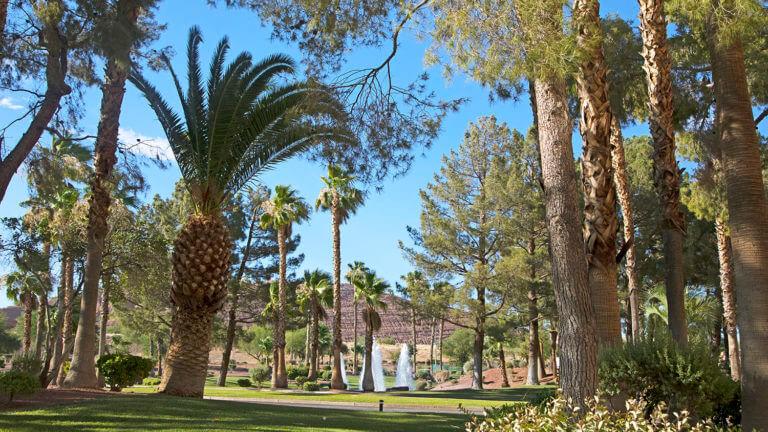 mesquite oasis