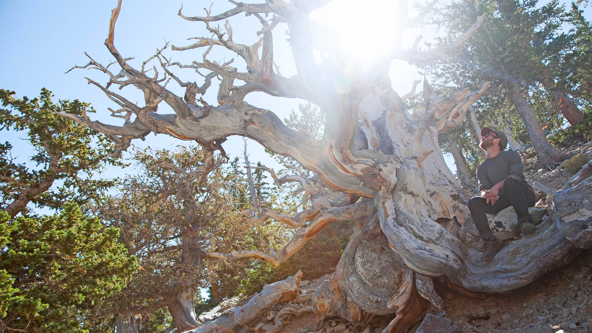 Bristlecone Trail in Great Basin National Park