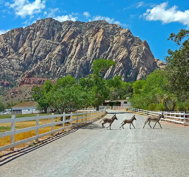 Wildlife Crossing, Nevada Wildlife, Nevada Burros,