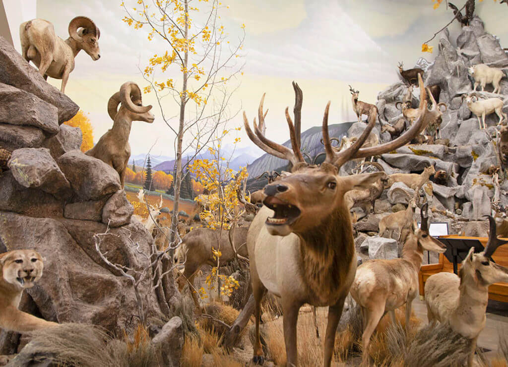 Northeastern Nevada Museum, Elko Museum, Nevada Museum
