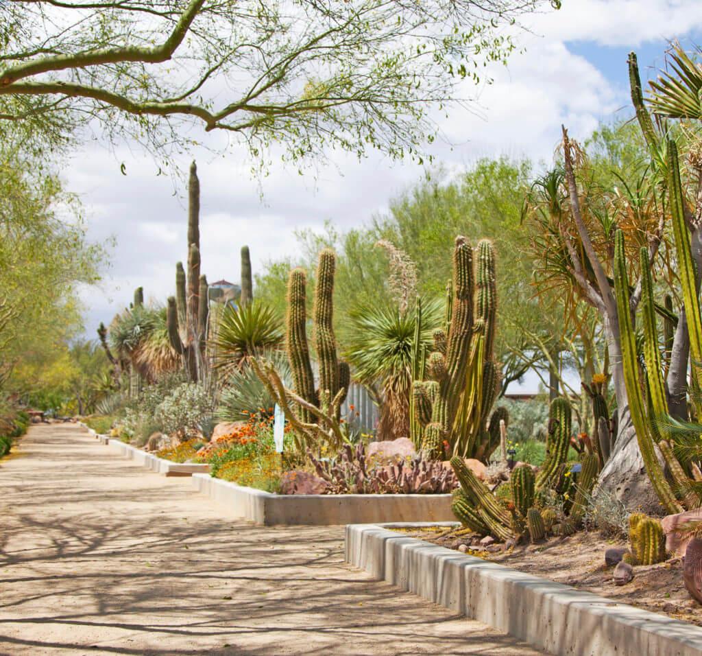 Las Vegas Springs Preserve, Springs Preserve, Botanical Gardens, Cactus Garden, Las Vegas Museum