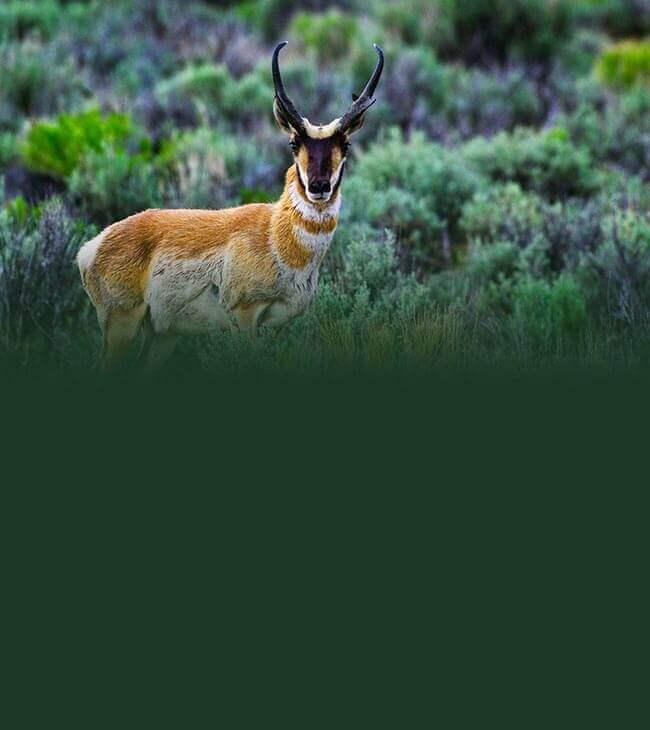 Nevada Wildlife Areas