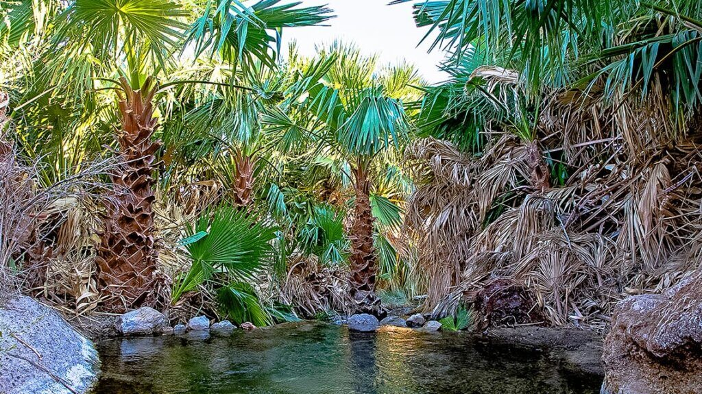 Rogers Warm Spring, Mesquite, Nevada