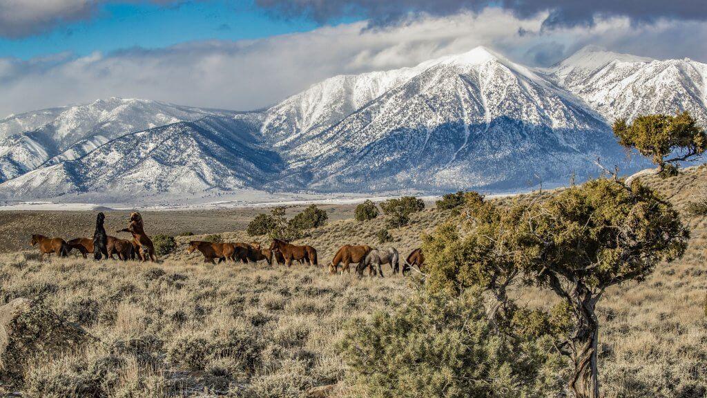 JT Humphrey Wildlife Photography Tours